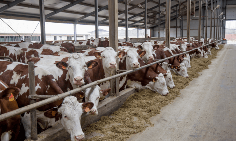 Texas Cattle Industry Lawsuits